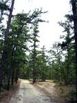 Mystère ovni dans les Pine Barrens Pinebarrens