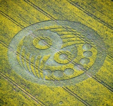 Crop Circle 2010 Old-sarum38