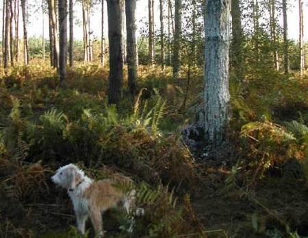 L'arbre de la forêt de Rendlesham, un mystère de plus… Scally2002