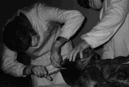 autopsija-vanzemaljac-u-vojnoj-bolnici-jna-1376327861-351695