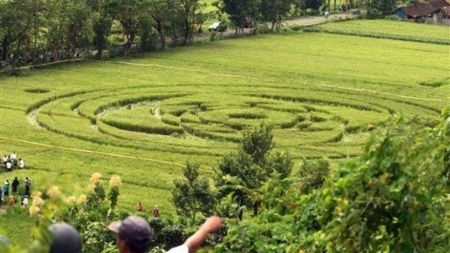 Photo d'un crop circle qui a fait les gros titres à Sleman, Indonesie en 2011. (AP Photo)