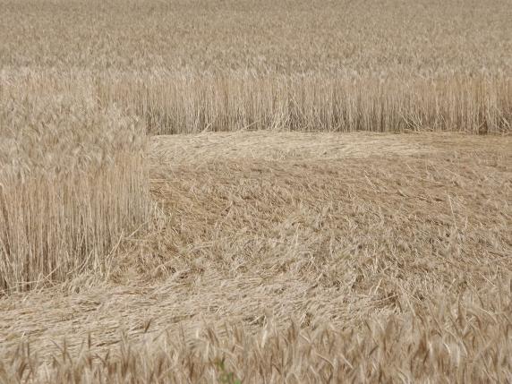 crop circle Pouilloux (Dpt 71)
