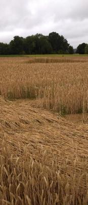 5 juillet 2020 -crop circle de Vimy près de Arras dans le département du Pas-de-Calais en région Hauts-de-France. Crédit phot Marc Louat ©